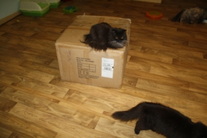 Here is the box the cat climber comes in. It weighs around 754 lbs.